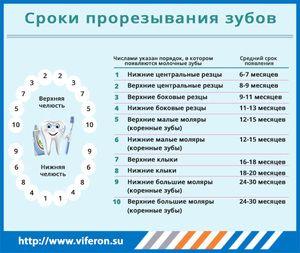 Termeni pentru tăierea dinților