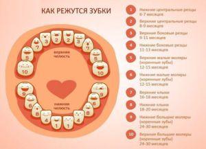dentiție