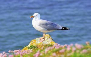 Pescărușul de păsări: ce pescuiește pescarii în timpul iernii