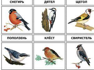 Păsări din centrul Rusiei