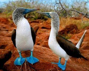 Comandă în formă de Pelican