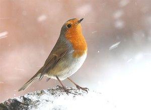Bird cu sânge galben