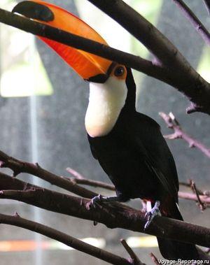Care pasăre are un cioc roșu
