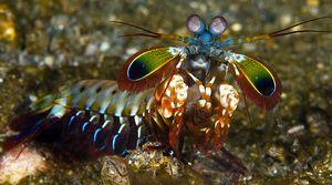 Rugăciunea mantis: trăsăturile unui monstru de mare