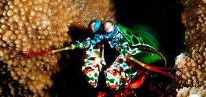 Vizualizarea cancerului de mantis
