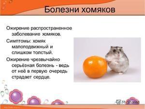 Hamsterii sunt bolnavi
