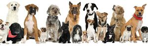 Varietate de rase de câini: nume, fotografii, sfaturi