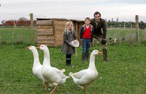 Creșterea și creșterea gâștelor acasă: de unde să începem, regulile de reproducere