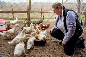 Reguli de îngrijire pentru goslings la domiciliu