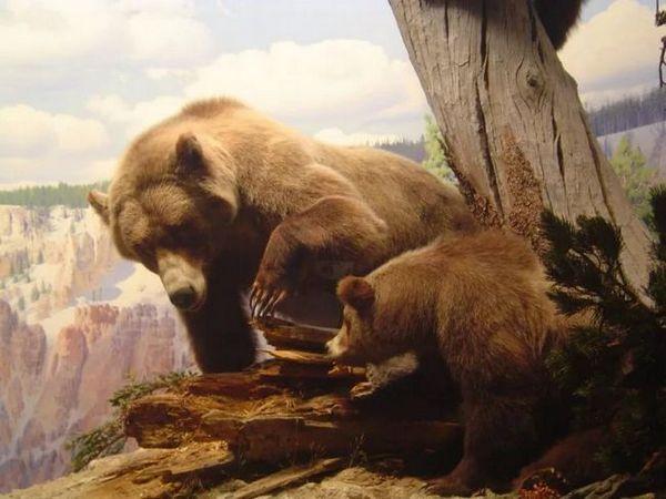 Peștera ursilor cu descendenți