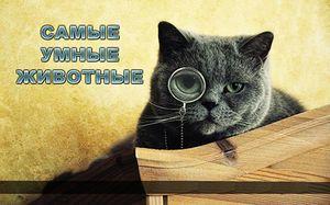 Ce animale sunt cele mai inteligente