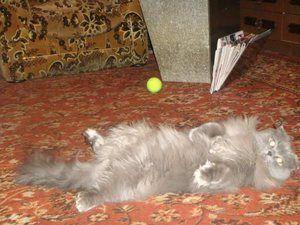 Etape de nastere la o pisica