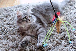 Jucarie pisica siberiana vâna