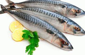 Caracteristici de macrou de pește