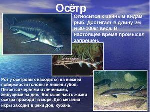 Pestele de pește