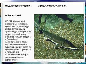 Valoarea nutrițională a peștelui de sturion