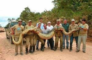 Cei mai mari șerpi din lume