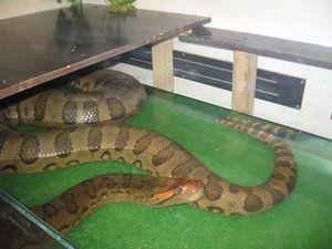Șerpi periculoși