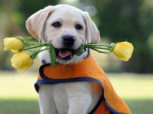 Cele mai bune rase de câini: specie și descriere