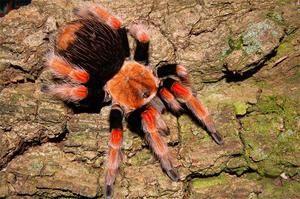 Poison în păianjen