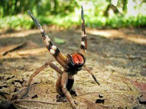 Consecințele unei mușcături a unui păianjen otrăvitor