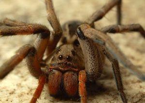 Caracteristicile celor mai otrăvitoare animale de pe planetă