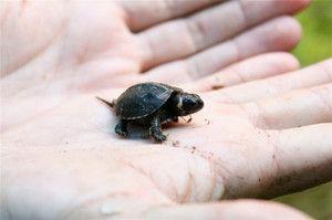 Cele mai mici animale din lume