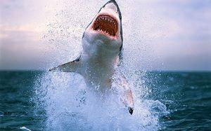 Cele mai periculoase rechini din lume. Cele 10 cele mai periculoase rechini