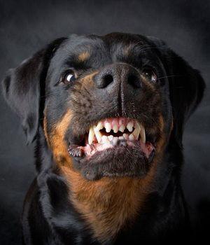 Cum să te comporți cu un câine agresiv