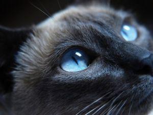 Cum sa alegi un nume pentru o pisica printre toate diversitatile