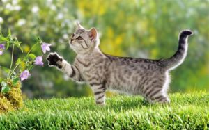 Pisicile răspund cu fericire unui nume simplu și scurt