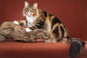 Dacă pisica pare neobișnuită - numele poate fi dat corespunzător