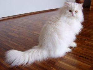 Cel mai simplu mod de a alege un nume bazat pe aspectul unei pisici