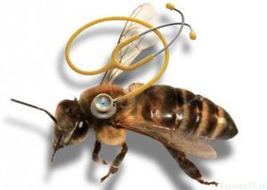 Cele mai frecvente boli ale albinelor și tratamentul acestora