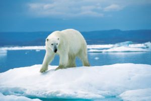 Pe planetă, multe animale nu sunt rare, dar au posibilitatea de a deveni așa