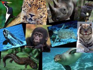 În cartea roșie există mulți reprezentanți și este în mod regulat completat cu noi specii