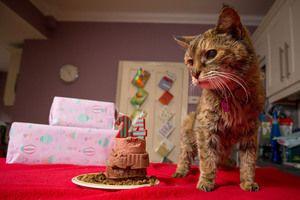 Cea mai veche pisică din lume