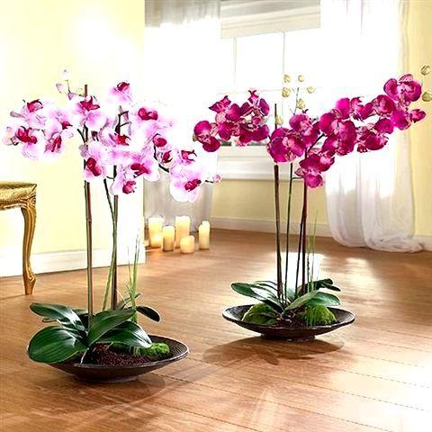 Secretele pentru îngrijirea orhideelor
