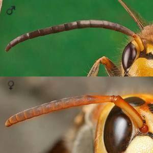 Comparația antenelor în coarne