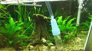 Sifon pentru curățarea acvariului. Tipuri de sifoane de acvariu și recomandări