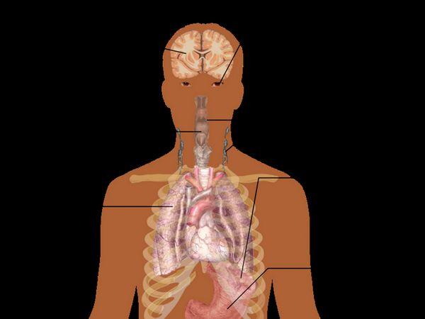 Simptomele infecției cu mononucleoză