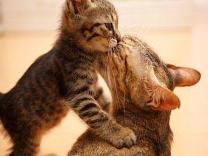 Fiți atent și prietenos cu animalul dvs. de companie în această perioadă dificilă