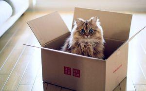 Ce să faci dacă pisica refuză să mănânce