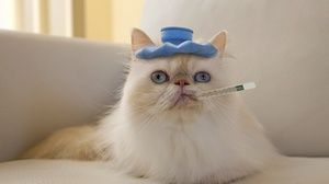 Pisica sa imbolnavit