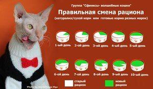 De câte ori va hrăni pisicile pe zi