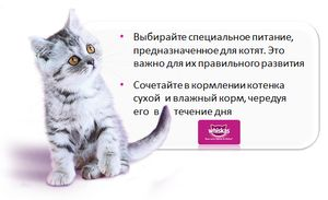 Cum să hrănești corect pisicile