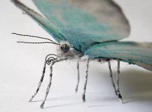 O variantă a unui fluture