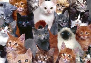 Pisici de rase diferite