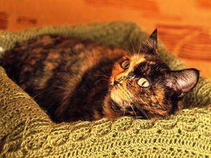 Durata estrului la pisici