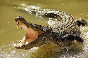 Crocodilul și habitatele sale